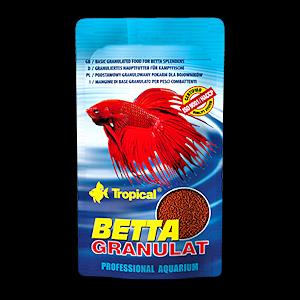 Tropical Betta rae