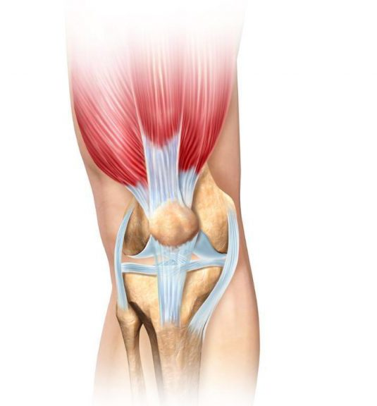 Hamstring Quadriceps Knee Muscles Patella Lateral Patellar