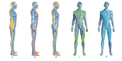 catene posturali