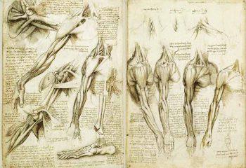 tavole-anatomiche muscoli