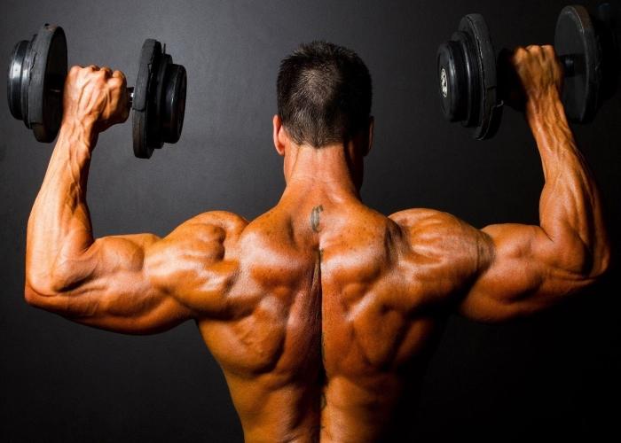 bruciagrassi che costruiscono i muscoli