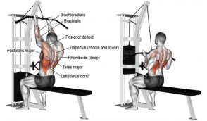 Muscle Building SARM Lat pulldown