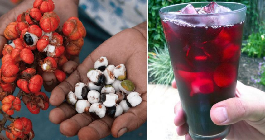 11 well being and fat-burning advantages of consuming guarana