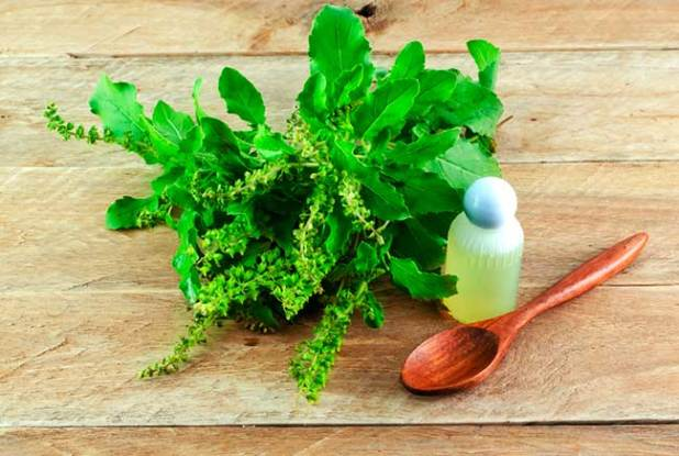 Tulsi and Mint natural Face Pack for Acne