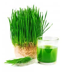More Ways Wheatgrass Can Help You Stay Fit and Beautiful