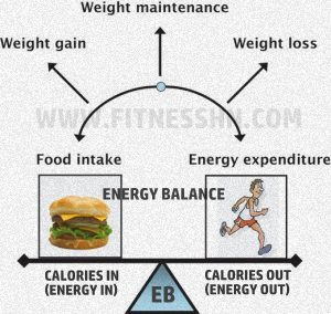 Energy Balance - Calories IN vs Calories OUT (CICO) - Fitness HN