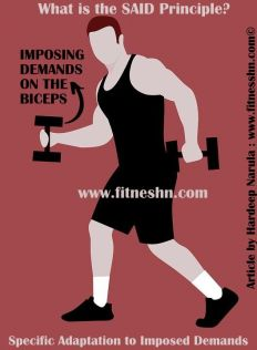 SAID Principle - Fitness HN - What is the SAID Principle