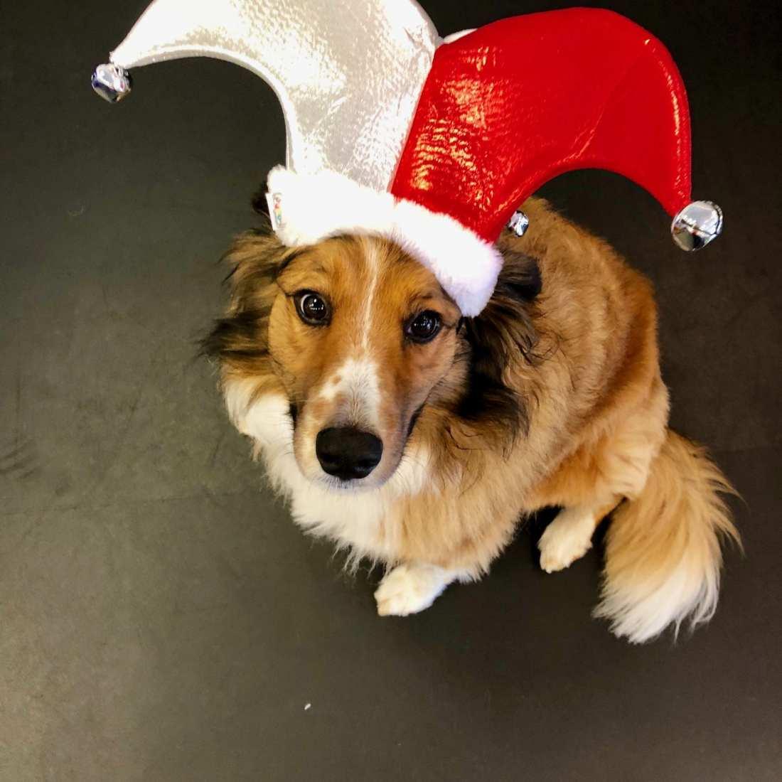 Bella-Christmas-Hat
