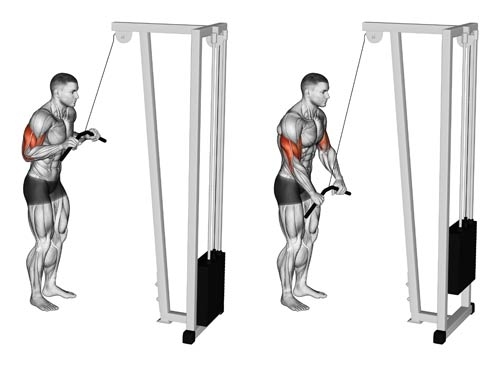 Pushdown Triceps Bar - Triceps Muscle Building