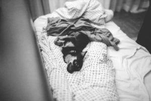 kochasz psa leżymy