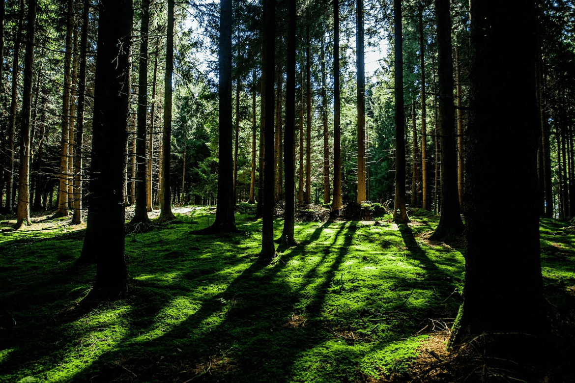 forest-505856_1280