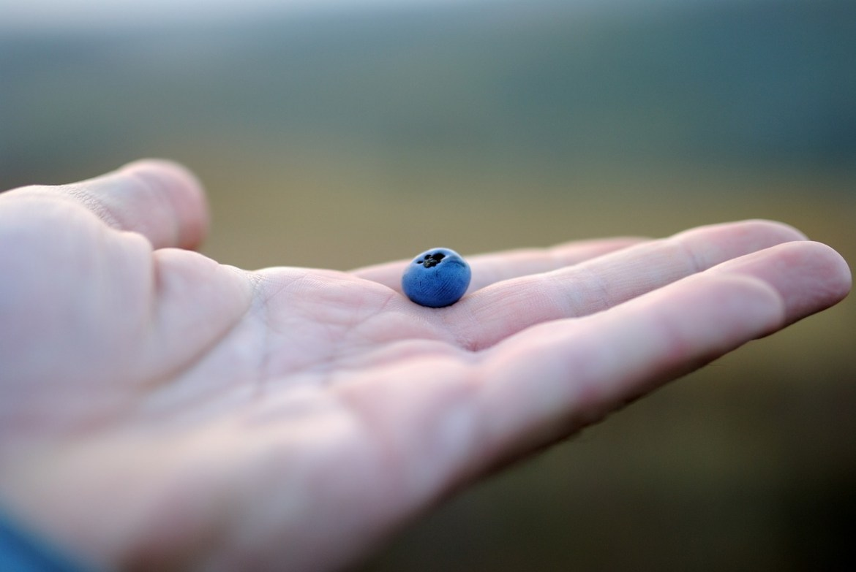 blueberry-691625_1280