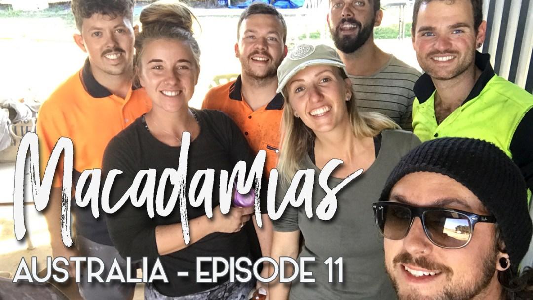 AUSTRALIA-episode-12-macadamias