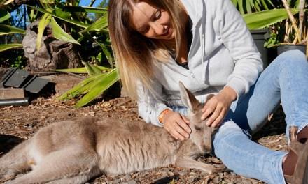 VLOG – On câline des bébés kangourous !