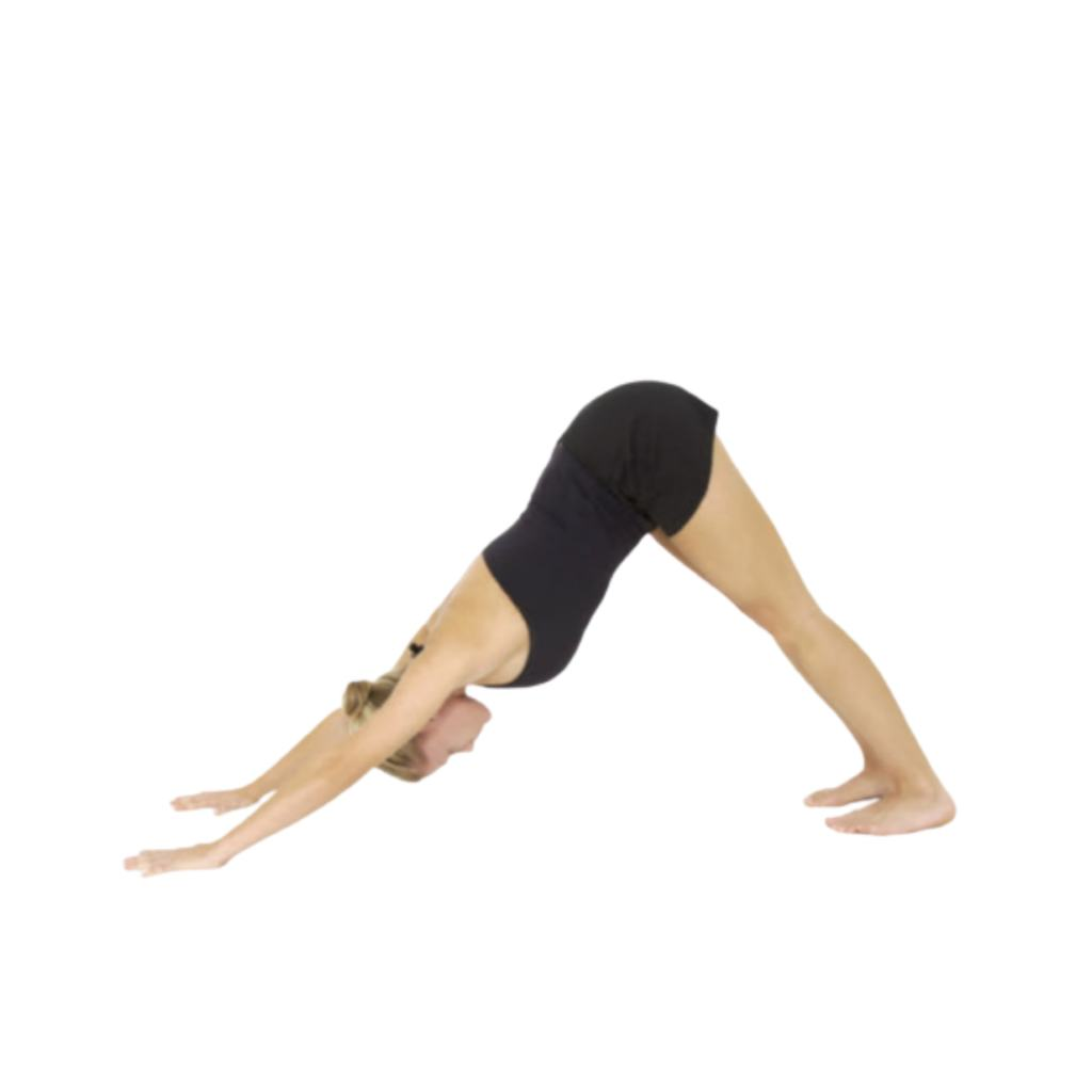 Downward Facing Dog (Adho Mukha Svanasana) - FITZABOUT