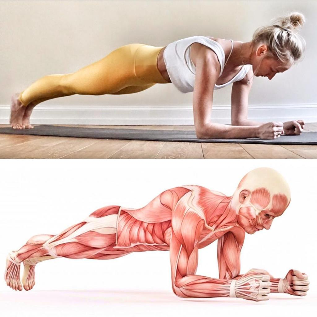 Forearm Plank Pose (Dolphin Plank) Steps, Benefits - Fitzabout