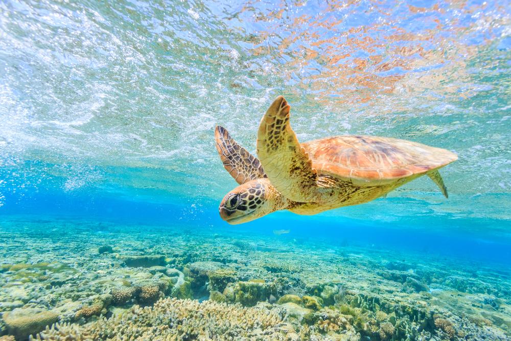 Great Barrier Scuba Reef Diving