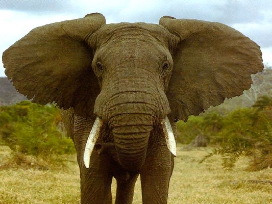 02_elefante.jpg