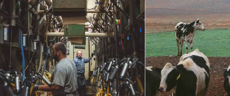 Left: Tony in the milking parlor surrounded by cows and robots. Right: getting some prairie time.