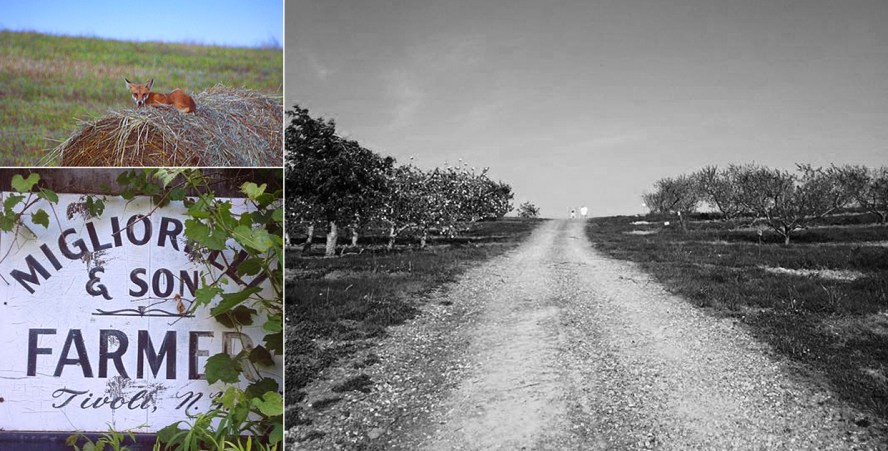 Clockwise from top left: A local sentinel keeping watch. Heading up through the apple fields. One of the original signs from 19xx