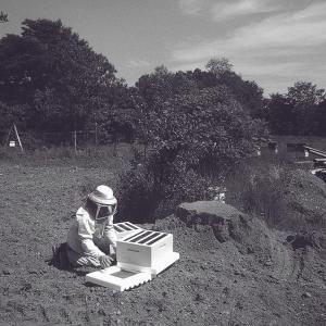 Honey Production - Five Acre Farms