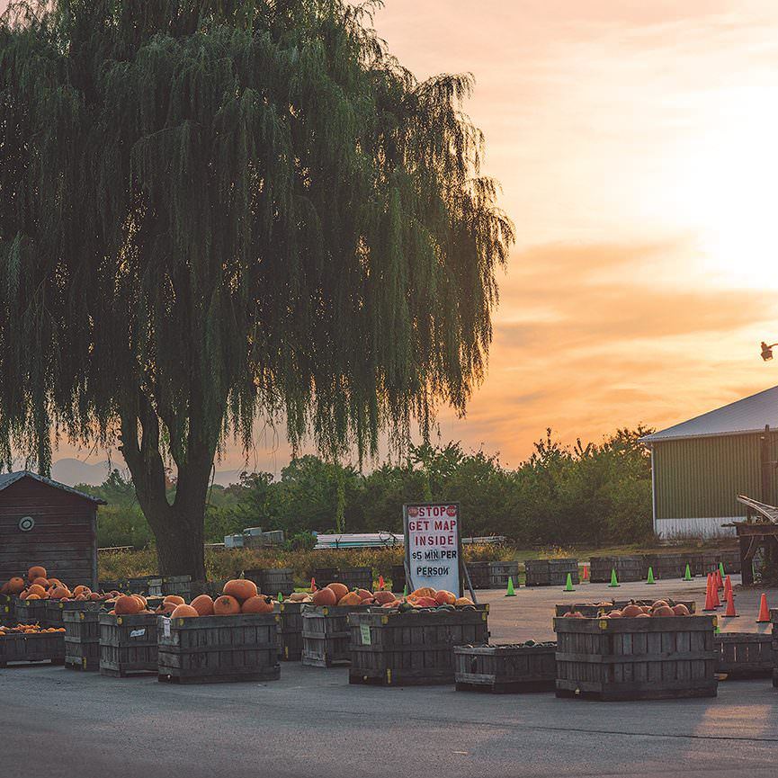Early Morning on Farm - Five Acre Farms