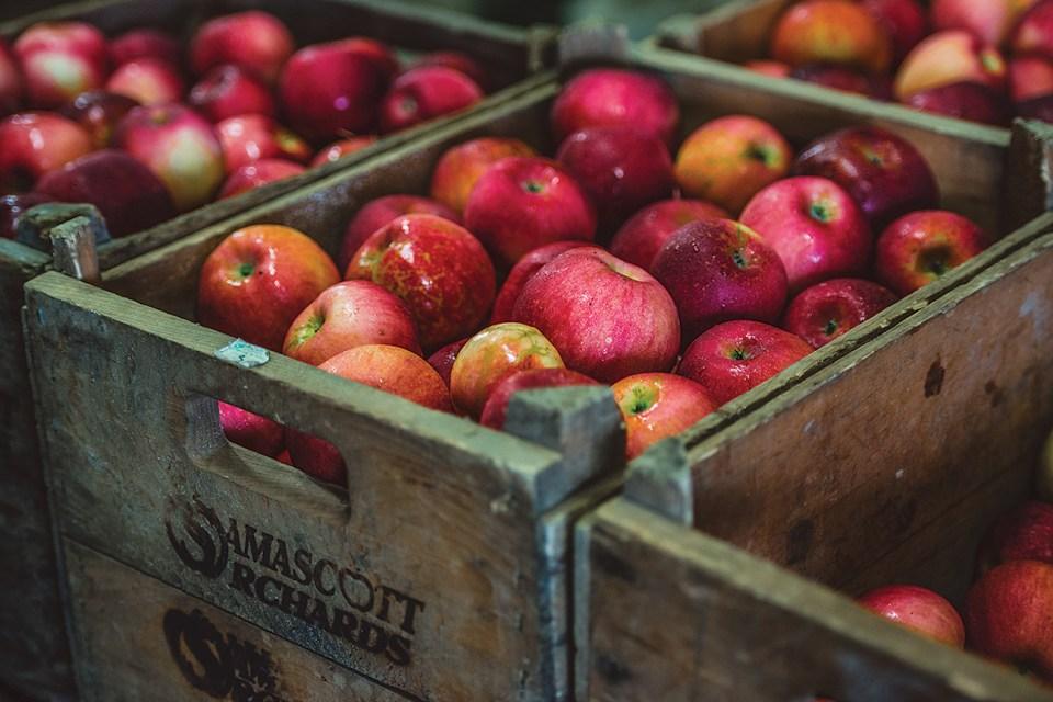 Arkanes Apples - Five Acre Farms