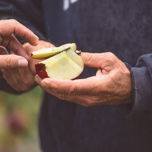 Apple Tasting - Five Acre Farms