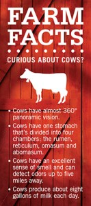 Farm Facts: Curious About Cows?