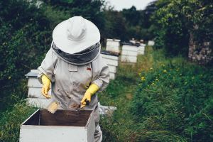 HONEY HARVEST Honey is harvested at family-owned KUTIK'S HONEY FARM and makes the quick, seven-mile trip to the creamery.