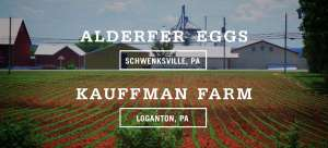 Alderfer Eggs - Five Acre Farms