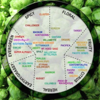 Hop Wheel (Tim Kreitz)
