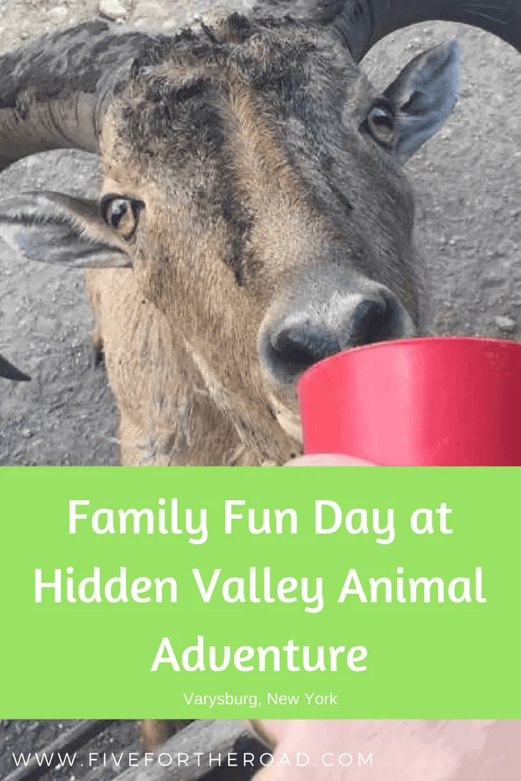Hidden Valley Animal Adventure