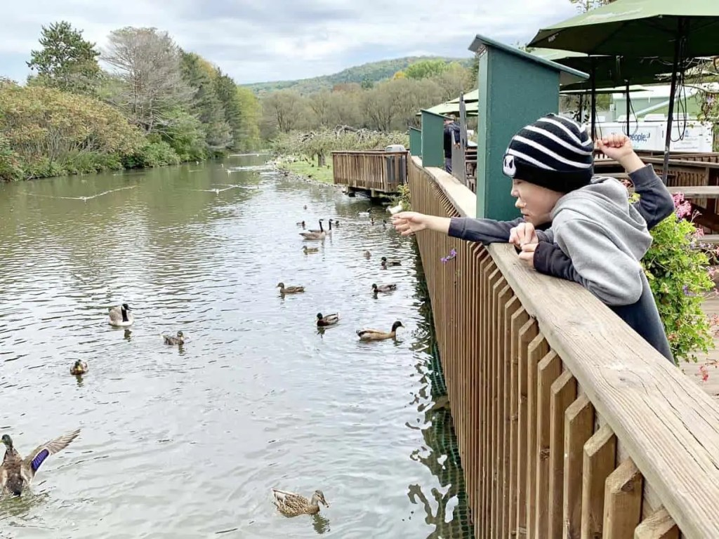 feed the ducks at fly creek mill