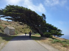 Trees grow up bent from the constant wind