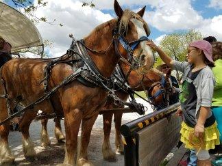 Nauvoo Carriage Ride