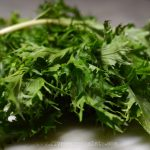 Mizuna Pesto Recipe | Five Senses Palate