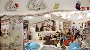 catcafe2