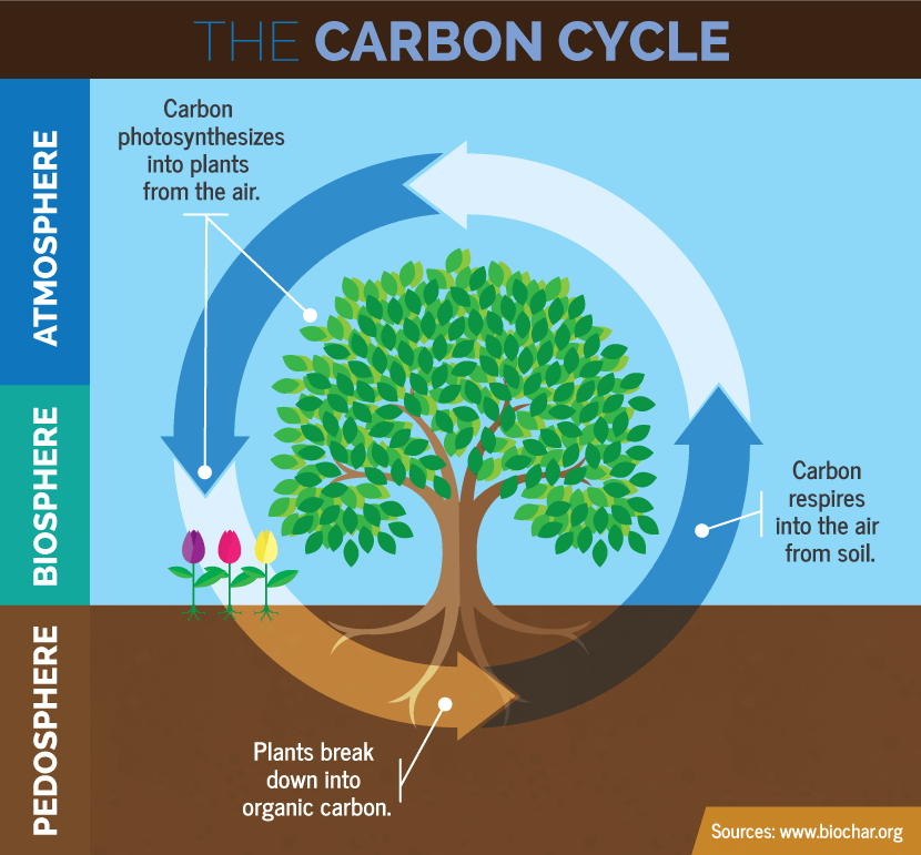 Three Year Garden Rotation Plan: The Carbon Cycle