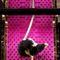 Louis Vuitton Ostrich Bag Fixture