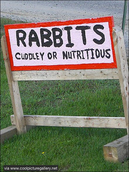 Rabbits Cuddley or Nutritious