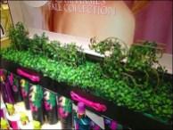 Topiary Signage Victoria's Secret 3