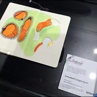 Moleskine Reach-In Museum Case A 3
