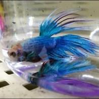 Tropical Fish Impulse Buy