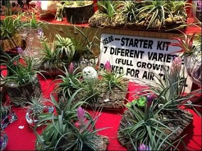 Air Plant Merchandising 3