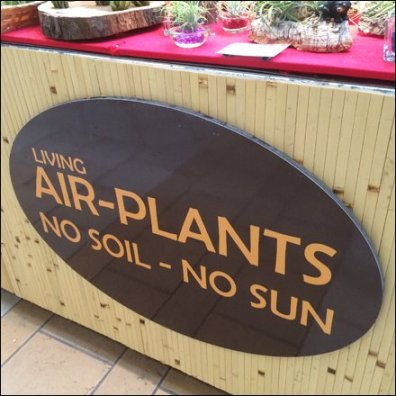 Air Plant Merchandising Aux