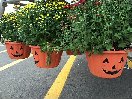 Pumpkin Pot Head Hang Rod 1
