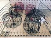 Open Wire Fencing for Chicken Wire Halloween Pumpkins