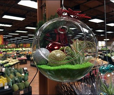 Free-Floating Plant Globes 3