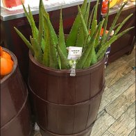 Gourmanoff Produce Aloe Bulk Barrel 2
